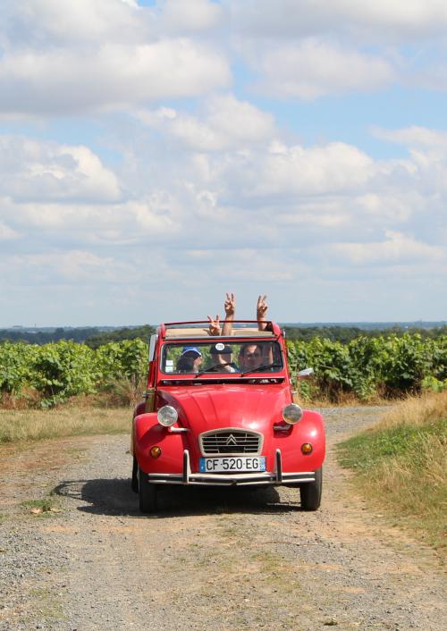 Voiture - Vignoble de Nantes